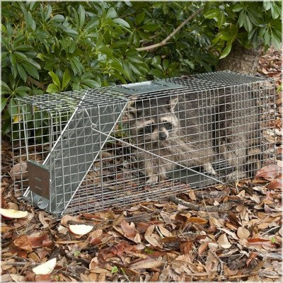Live Animal Trap picture 1