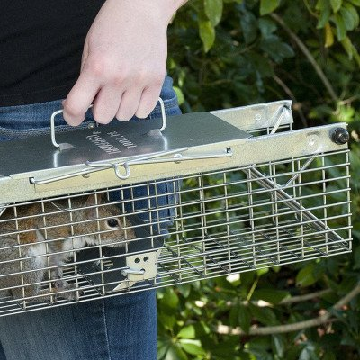 Live Animal Trap picture 2