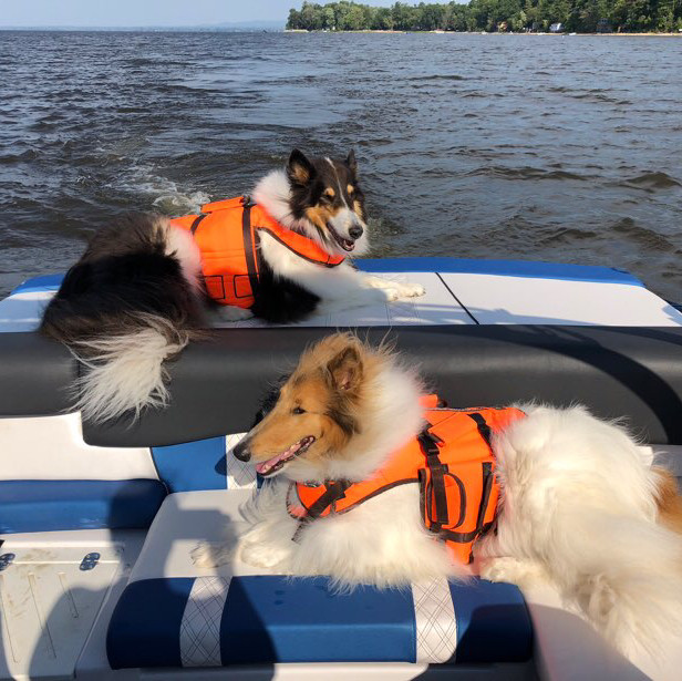 large dog water vests