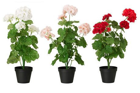 Artificial Potted Plant, Geranium Assorted Colours