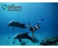 Tiran Island Cruise and Snorkeling Sharm El Sheikh 2018