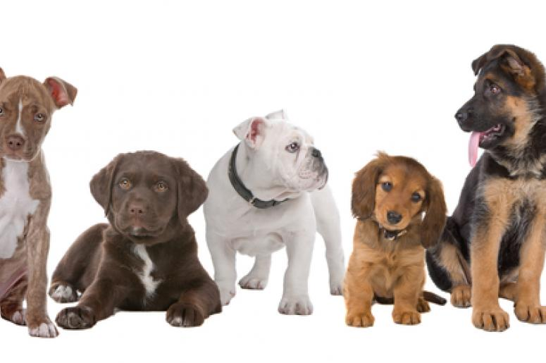 The Most Popular Dog Names In 2016 The River 1045 Wrvr Memphis
