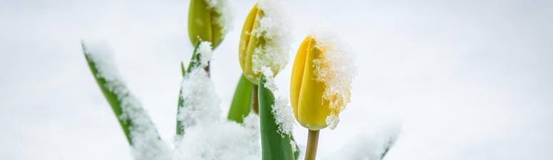 Could The First Day Of Spring Include...Snow?