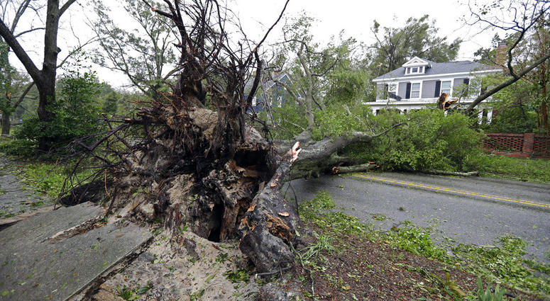 Uprooted Tree in Hurricane Florence