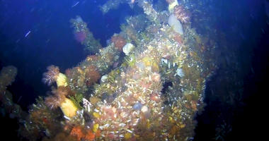 Divers Discover Lost WWII Ship 75 Years After Sinking In Battle Off Alaska