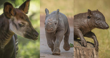 Some of the Cutest Additions to Chester Zoo in 2018