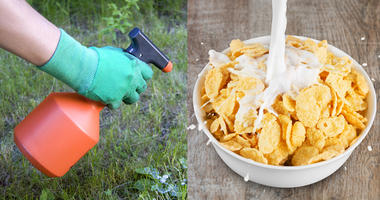 Study Finds Cheerios, Oats, Other Breakfast Foods May Contain Weed Killer