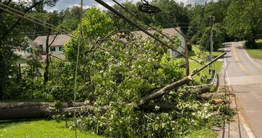 Downed Tree, Power Lines