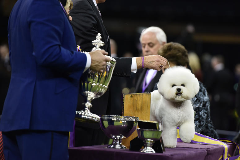 Dog Show East Sussex