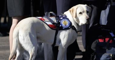 Sully, the yellow Labrador retriever who was former President George H.W. Bush's service dog, stand next to Bush family members during a departure ceremony