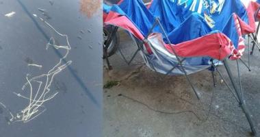 A deep scratch in a cars paint and a KU pop-up canopy tent is bent and mangled