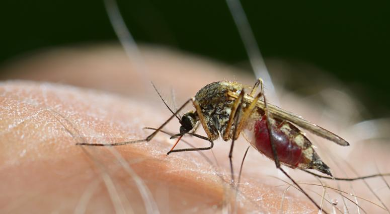 Four more areas of Knox County test positive for West Nile virus