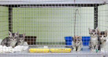 Five kittens in a cage at the animal shelter