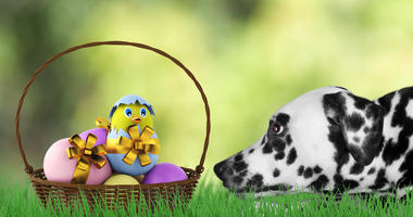 Cute Easter dog with eggs in basket