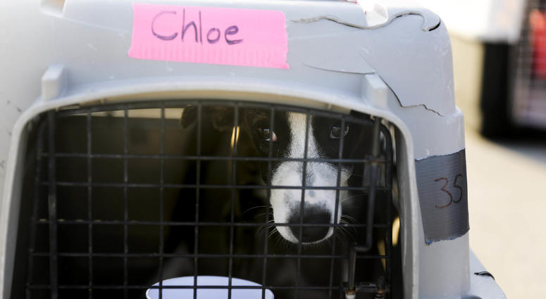 A dog in a crate waits to be loaded onto an airplane