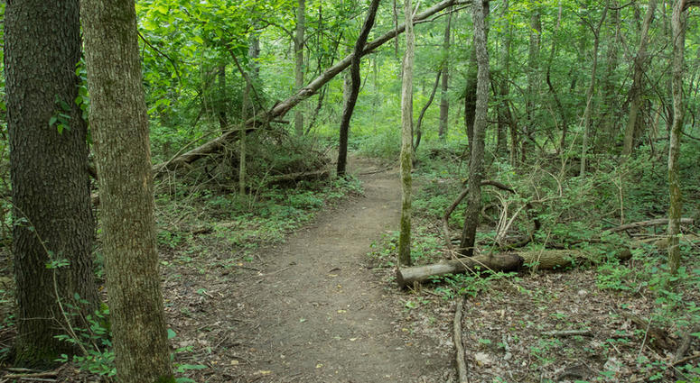 Tranquil Hiking Trail in a Delaware County, Ohio Metro Park