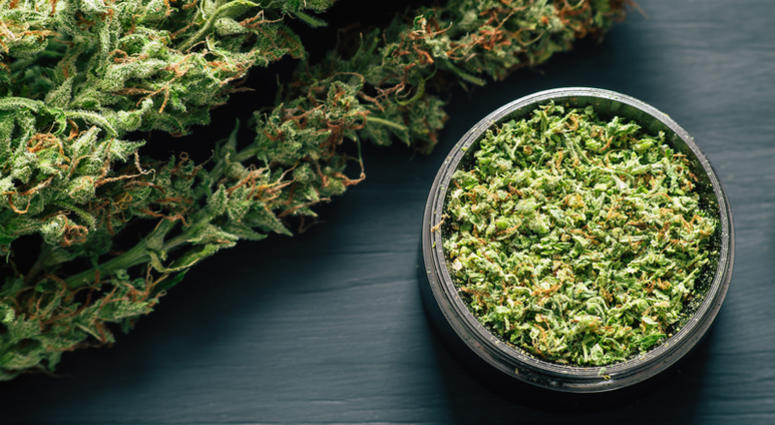 Macro of marijuana with trichomes and crushed grass in a grinder for chopping a canapis on a black table