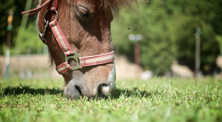 Stock image of horse grazing in pasture.