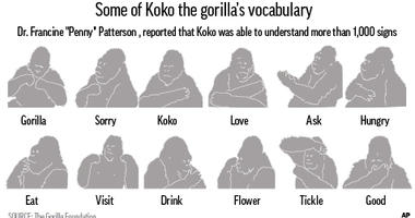 Fans mourned Koko's passing, and the foundation's website experienced excessive traffic on Thursday.
