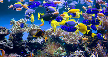 The aquarium will delight You with its unforgettable beauty of the underwater world.