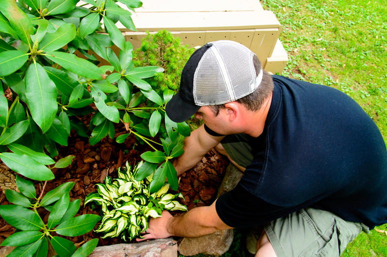A Man in a plain black shirt and hat Planting and landscaping.