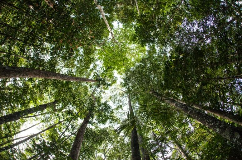 canopy of trees