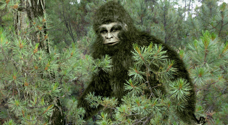 Hunter Thought He Was Firing At Bigfoot Victim Tells Police
