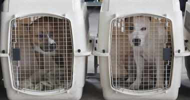 Group rescues 43 dogs from Kansas hoarder
