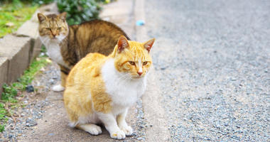 Lawrence asked to consider program for feral cats