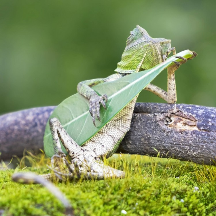 LIZARD-PLAYING-THE-GUITAR-1-879x1024