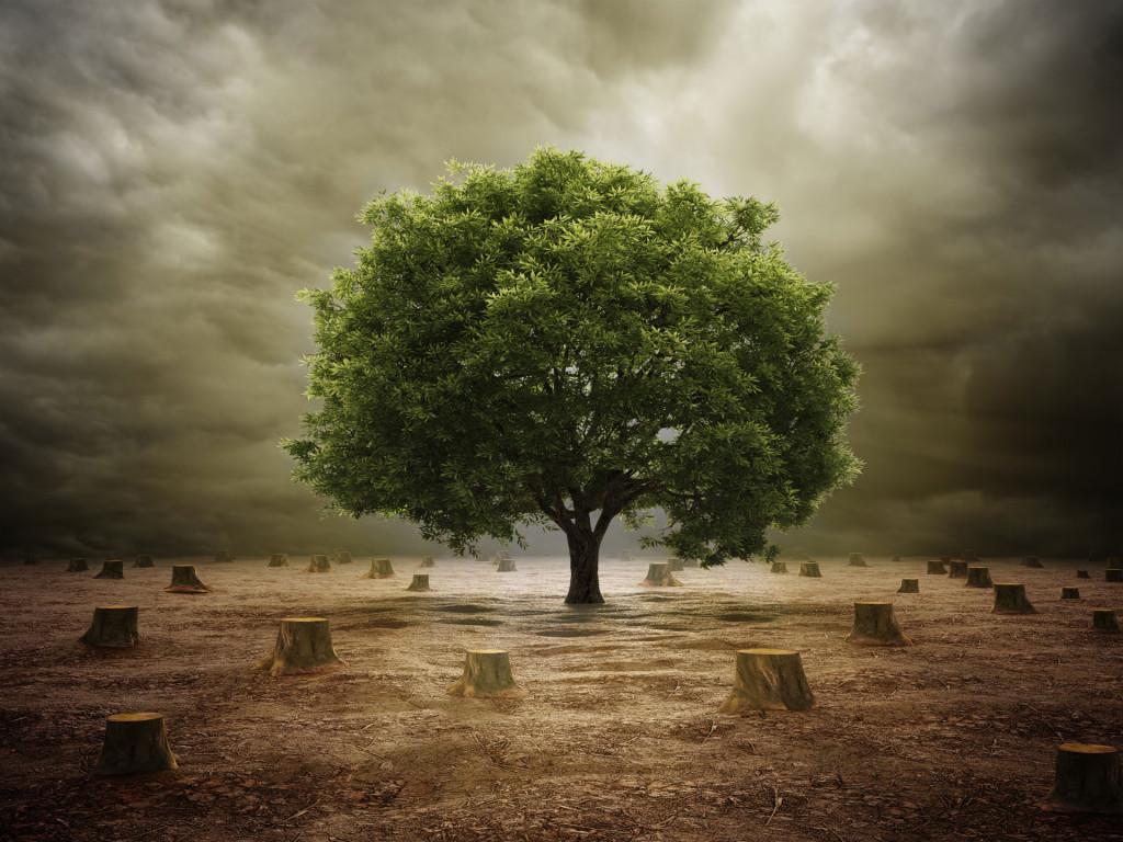 one-last-tree