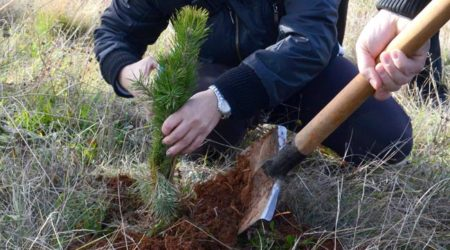 ways-to-donate-plant-one-tree-now