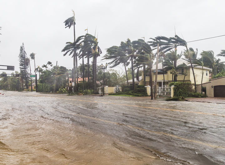 one-milion-trees-control-flooding