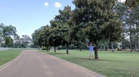 Southern Magnolia, Chattanooga TN