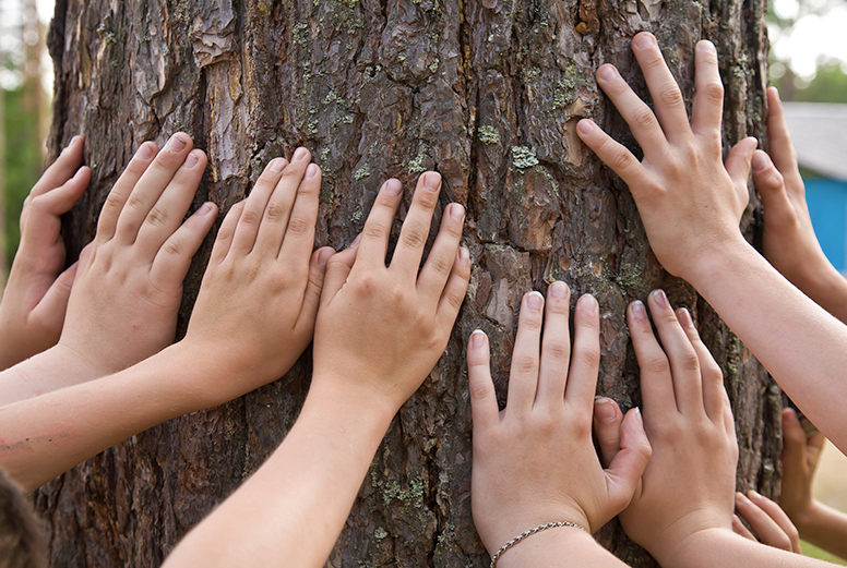 group of people's hands agains a tree trunk