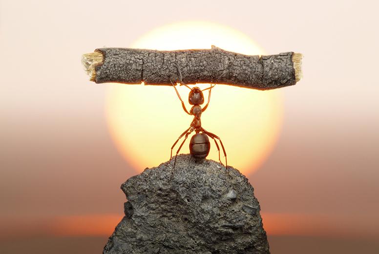 Ant lifting a log