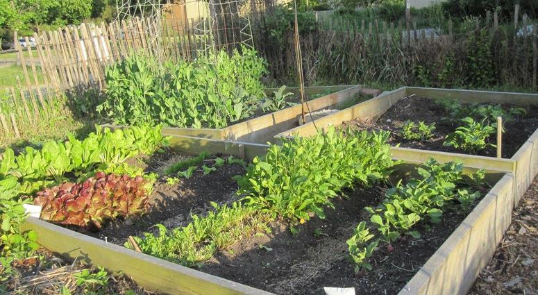 Woodlawn Residents Hold Petition To Keep Community Gardens Open