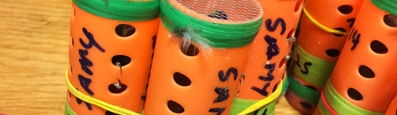 Customs Finds 70 Finches In Hair Rollers