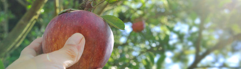 17 Places To Go Apple Picking Near Chicago