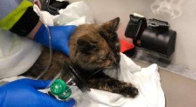 A cat is treated with oxygen after being rescued from a house fire in the 800 block of Buckeye Street