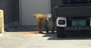 Monkey Escapes Crate At San Antonio Airport, Eventually Arrives At New Home