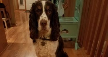 Reward For Killing Of Plymouth Dog Over $9,000