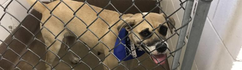 Rescue dogs from Mississippi arrive safely in Golden Valley