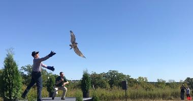Raptors released back into the wild near Hastings
