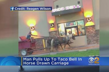 Man Pulls Up To Taco Bell In Horse-Drawn Carriage