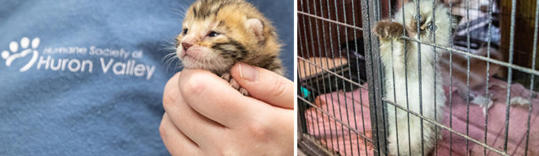 Humane Society of Huron Valley rescued animals