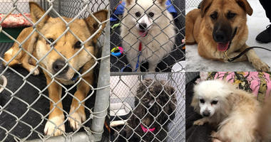 Dogs rescued from meat trade in South Korea