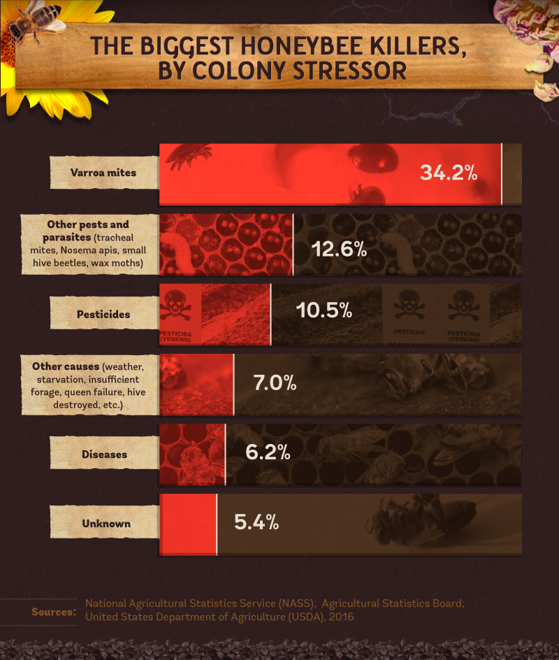 Honey Bee Rates Of Decline Across The United States