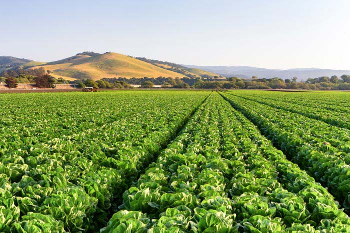 Salinas, CA | Had relatively high precipitation and wind variance
