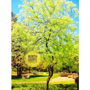 North County Trees